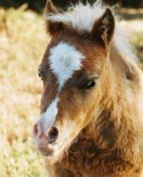 Venlan ja Stellan hevosblogi